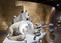 Noční komentovaná prohlídka expozice Archa Noemova v Národním muzeu