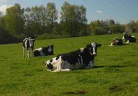 Farmářské slavnosti pro rodiny s dětmi v Jižních Čechách