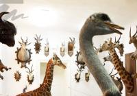 Zpřístupněný zoologický depozitář