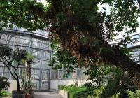 The Botanical Garden of the Science Faculty of Prague's Charles University