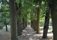 Park pod Kotnovem, Tábor