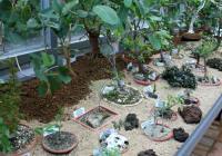 Prodejní výstava kaktusů a jiných sukulentů