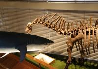 Noc v muzeu: Halloweenské noční prohlídky expozice Archa Noemova