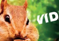 3D filmy ve VIDA!: Pidiobři a Divoká Afrika
