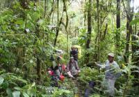 Výzkum a ochrana druhového bohatství obojživelníků a plazů lesů And