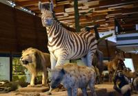 Komentované prohlídky přírodovědecké expozice Archa Noemova
