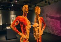 Výstava Body The Exhibition prodloužena. Návštěvníci ji mohou zhlédnout ještě v červenci