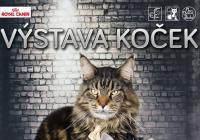 Mezinárodní výstava koček Star Cats