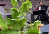 Vinobraní a dožínky na Kačině
