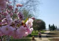 Trojská botanická zahrada přivítala novou sezónu. Pro návštěvníky chystá americký rok plný relaxace i poznání