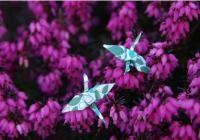Vyrob si vlastní origami náušnice