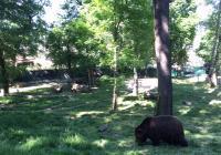 Městské medvědárium v Berouně