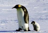 Kino Klub Zahrada: Putování tučňáků