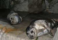 Večerní prohlídky v Zoo Ústí nad Labem