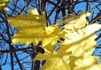 Pochod podzimním lesem - Blansko