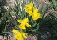 Jarní pouť - Ddm Teplice