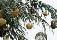 Vánoční svátky v Rezervaci Bororo - Zoo Praha