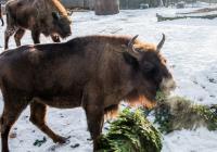 Vánoční nadílka u zvířat v Zoo Praha