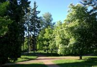 Schrollův park, Broumov