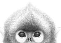 Výstava kreseb Opice Petra Nikla na zlínském zámku