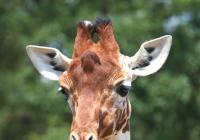 Světový den žiraf v Zoo Brno