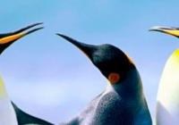 Tučňáci na arše