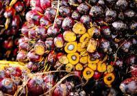 Den bez palmového oleje v Zoo Liberec