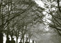 Terje B. Englund: Špion, který přišel pozdě