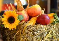 Hody s plody podzimu - Borovany