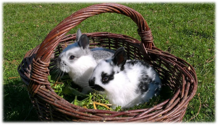 Pohádkové Velikonoce