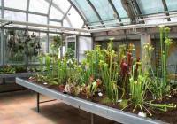 Výstava masožravých rostlin