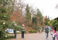 Rozsvícení vánočního stromu v Zoo Brno