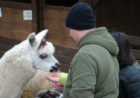 Štědrodopolední krmení zvířátek v Zoo Brno