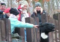 Novoroční komentovaná krmení v Zoo Brno