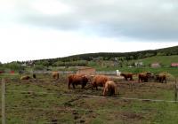 Výběh ekochovu Highland Cattle, Malá Úpa