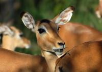 Večerní prohlídky - Safari Park Dvůr Králové