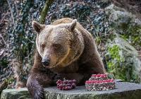 Medvědí Vánoce - Zámek Český Krumlov