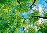 Pohádkový les a Staročeský jarmark v Krásné Lípě