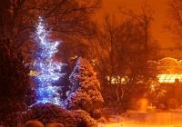 Vánoční zoo Dvůr Králové