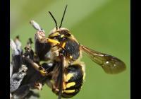 Včely ze všech ú(h)lů
