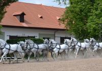 Den starokladrubského koně 2018