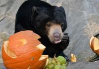 Strašidelná Zoo Ústí nad Labem