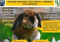 Celopražská výstava králíků holubů a drůbeže Modřany - Praha