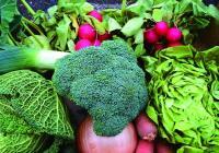 Farmářské trhy ve městě Vrchlabí