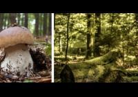 V lese - výstava - Zámek Slavkov u Brna