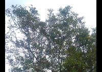 Slavnost padajícího listí - Strážnice