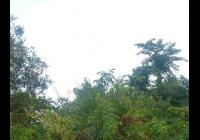 Novojičínský jarmark