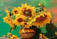 Květina je v každém z nás