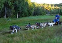 Norsko dobrovolnicky v sedle psího spřežení