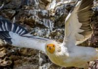Den supů a kondorů v Zoo Praha
